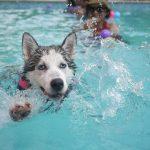 piscine à coque avec plage